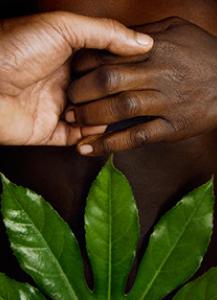 1_hands_leaf